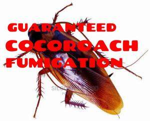 Cocoroach Effective Guaranteed Fumigation | Cleaning Services for sale in Central Region, Kampala