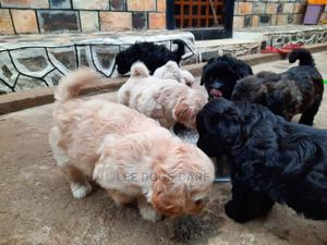0-1 Month Female Purebred Maltese | Dogs & Puppies for sale in Central Region, Kampala