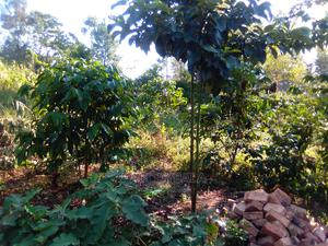 Land for Sell | Land & Plots for Rent for sale in Western Region, Kibaale