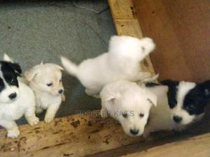 1-3 Month Female Purebred Golden Retriever | Dogs & Puppies for sale in Central Region, Kampala