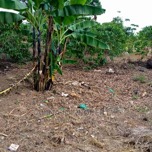 4 Fertile Acres for Sale at 60m All,With Coffee,House,Banana | Land & Plots For Sale for sale in Central Region, Luweero